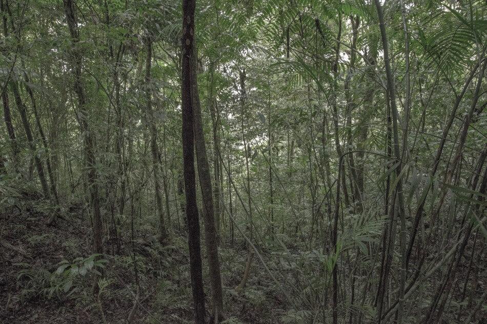 Matthew Swarts, La Reserva Curi Cancha, Monteverde, Costa Rica, 2014.